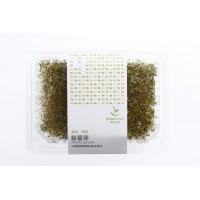 [綠工坊] 有機苜蓿芽 活的芽菜 盒裝 低溫宅配 綠藤
